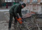 В Пензе ведется спил аварийных деревьев