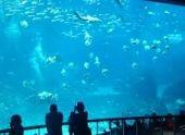 В пензенском океанариуме обнаружили ряд серьезных нарушений
