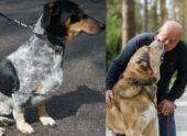 Что делать при встрече с потерявшейся собакой рассказал президент РКФ Владимир Голубев