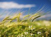 В Пензенской области объявили желтый уровень погодной опасности