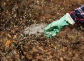Волонтеры и активные жители Пензы внесли свой вклад в акцию «Чистый город»